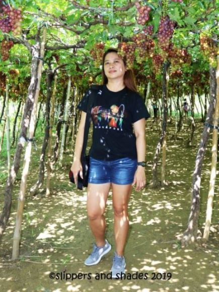Yours truly and the joys of seeing grapes fresh from vines