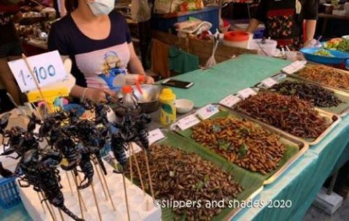 insects for sale