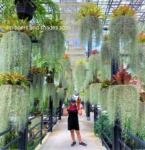 Jhen is having fun looking at the hanging plants at Garden in the Sky