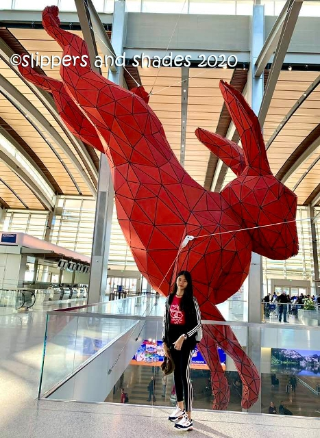 "Shen and the red rabbit called ""Leap"" @ Sacramento International Airport"